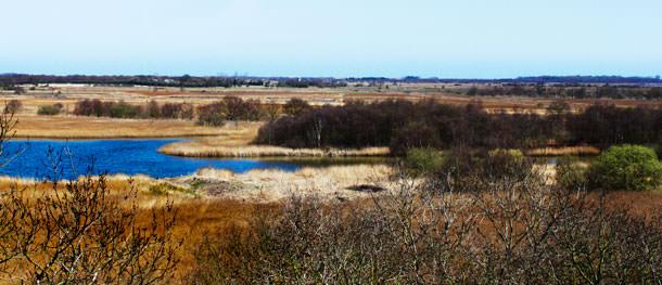 Birdwatching on the Norfolk Broads