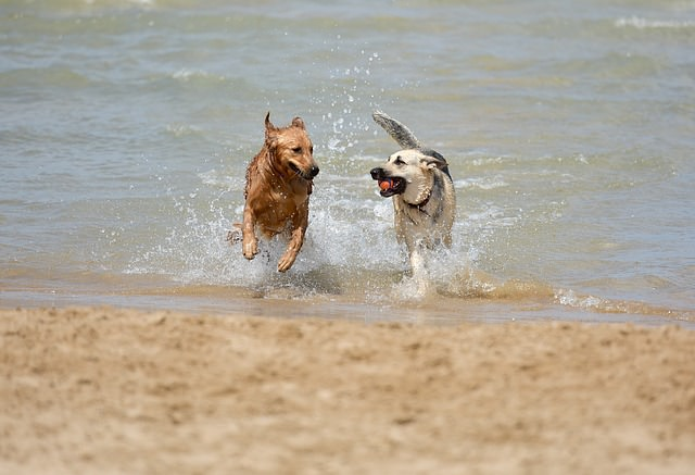 Dog Friendly Pubs and Cafes in Caister and Great Yarmouth